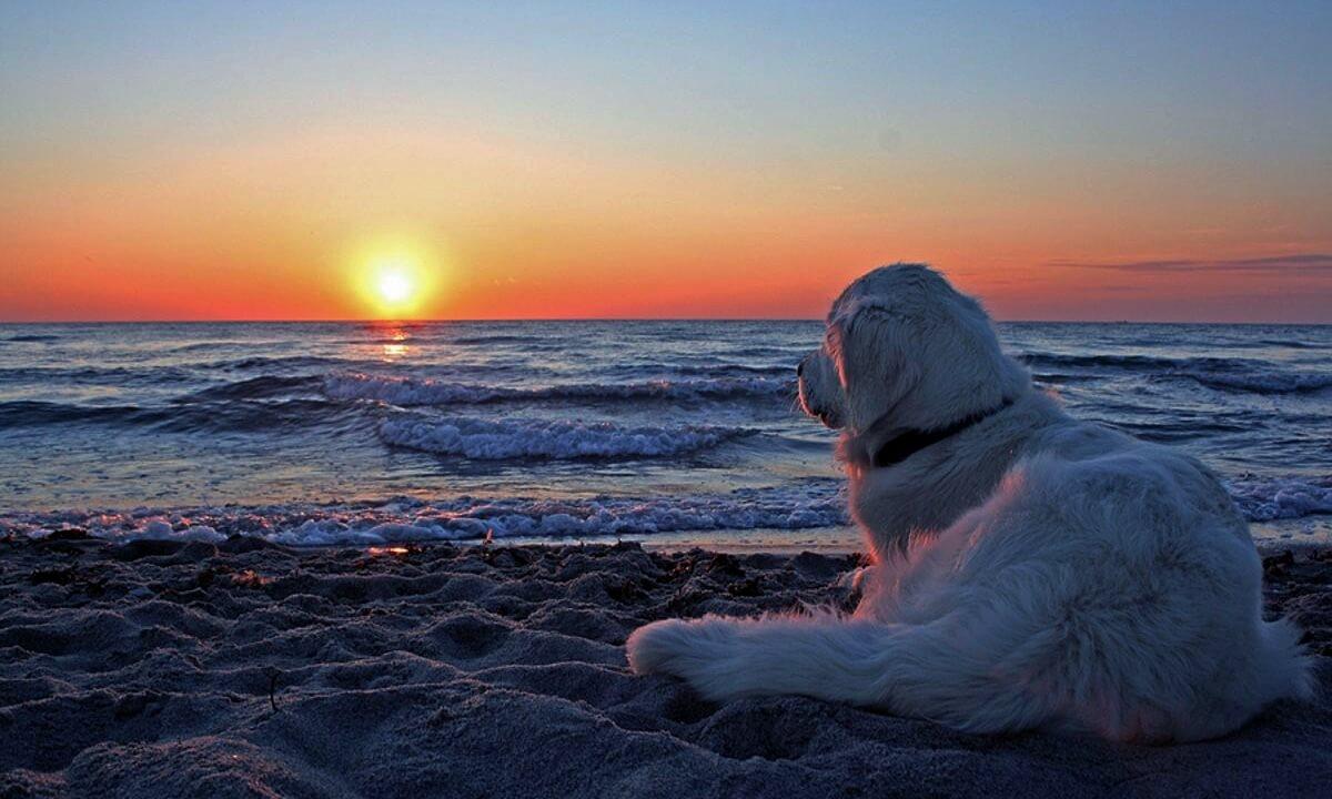 Cachorro olhando o por-do-sol