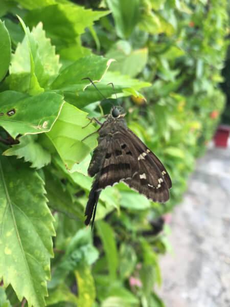 Small Moth on Leaf